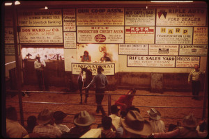 Livestock Auction Held Every Friday at the Rifle Sales-Yard, 10/1972